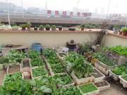 Cây cảnh - Vườn - Kinh nghiệm hay trồng rau, củ, quả trong thùng xốp