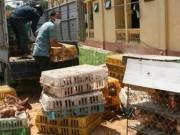 """Mua sắm - Giá cả - Lo gà thải, thịt """"rác""""… Trung Quốc tràn vào Việt Nam"""