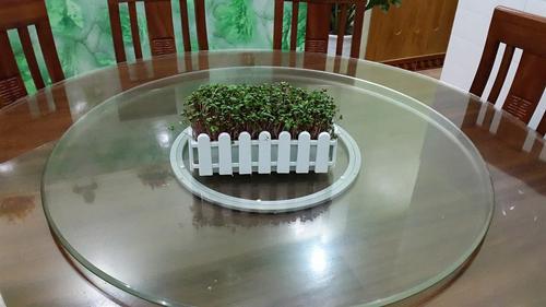 Mẹ Lào Cai trồng rau mầm kín bậu cửa sổ cho chồng con-5