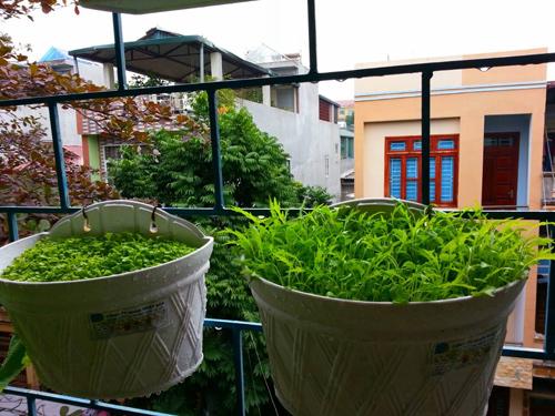 Mẹ Lào Cai trồng rau mầm kín bậu cửa sổ cho chồng con-11