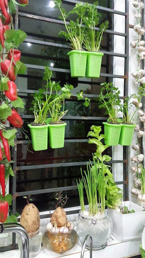 Mẹ Lào Cai trồng rau mầm kín bậu cửa sổ cho chồng con-6