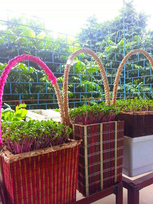 Mẹ Lào Cai trồng rau mầm kín bậu cửa sổ cho chồng con-7