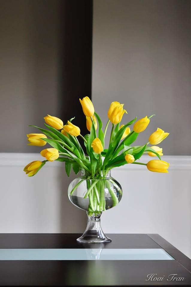 me man tai cam hoa tulip cua me bau viet o my - 6