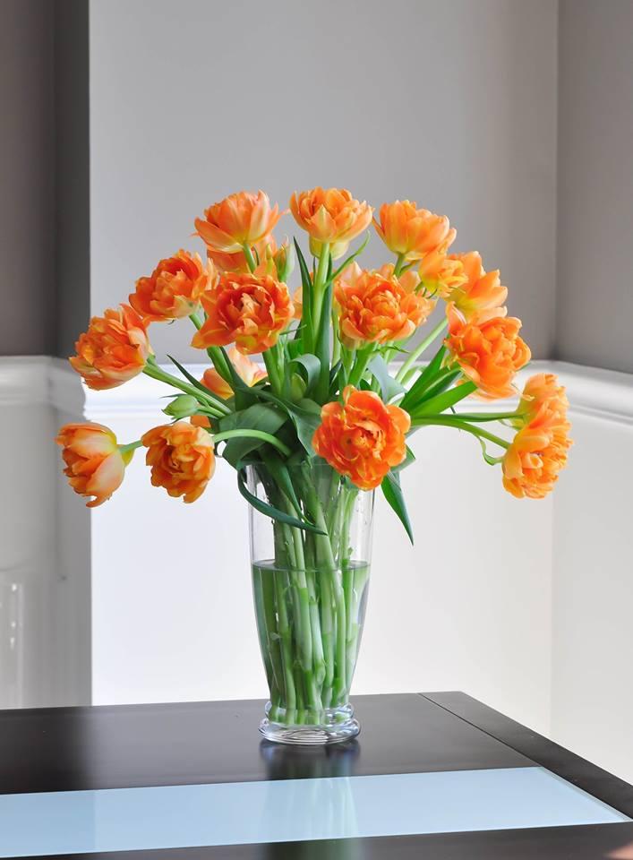 me man tai cam hoa tulip cua me bau viet o my - 18