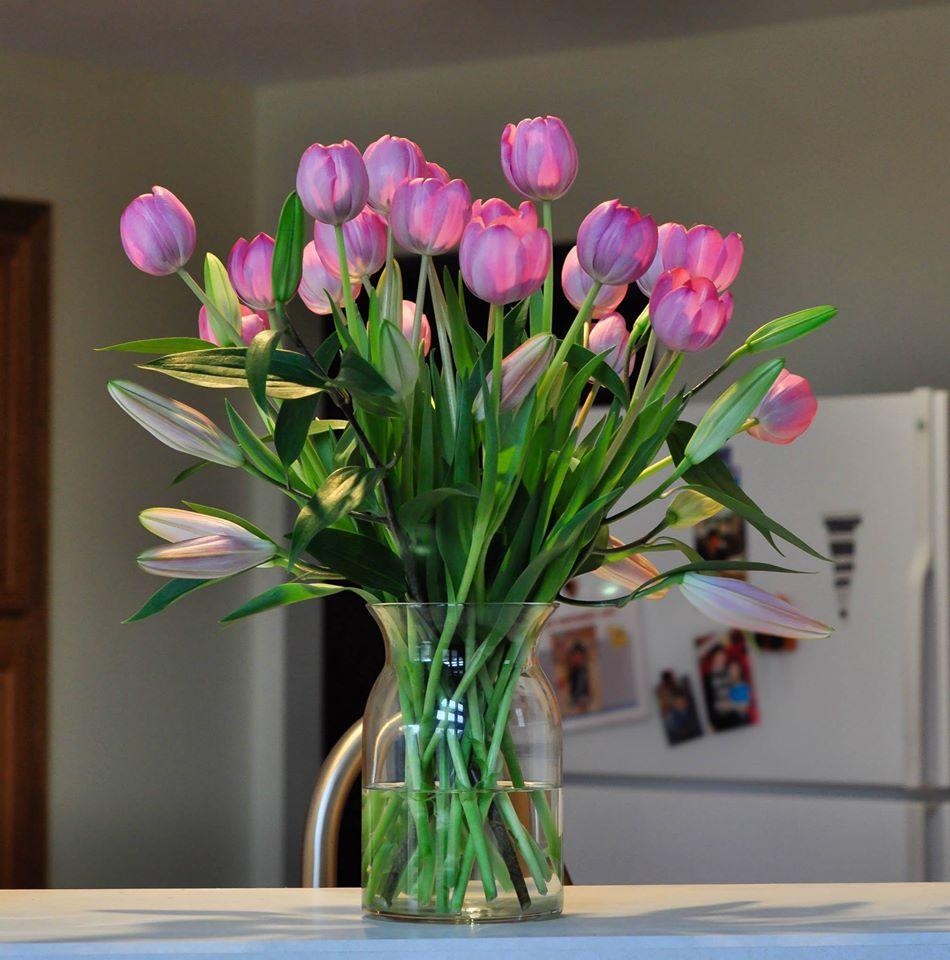 me man tai cam hoa tulip cua me bau viet o my - 7