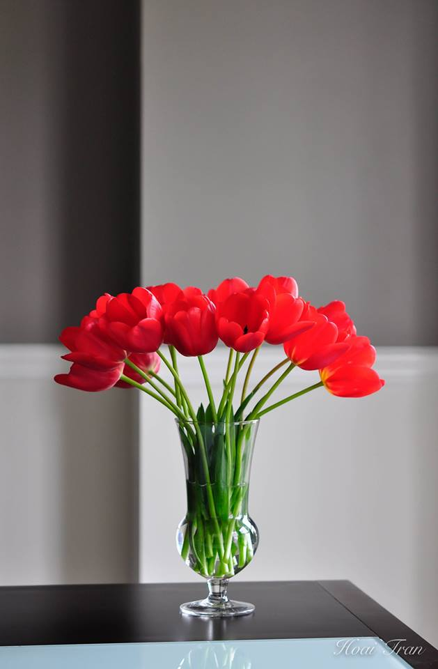 me man tai cam hoa tulip cua me bau viet o my - 5