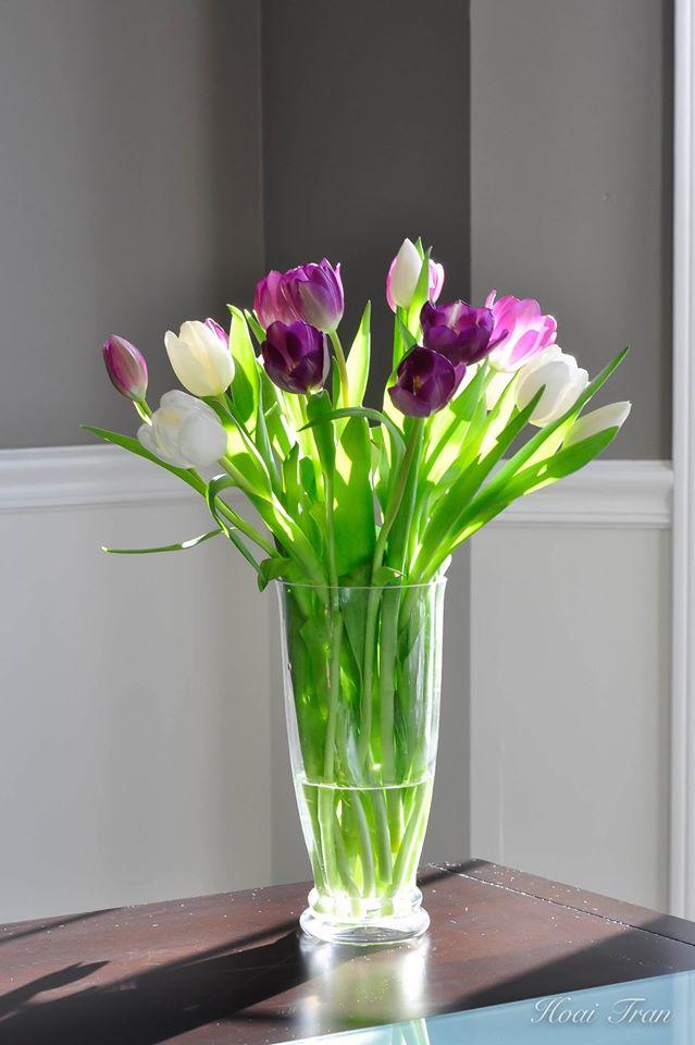 me man tai cam hoa tulip cua me bau viet o my - 14