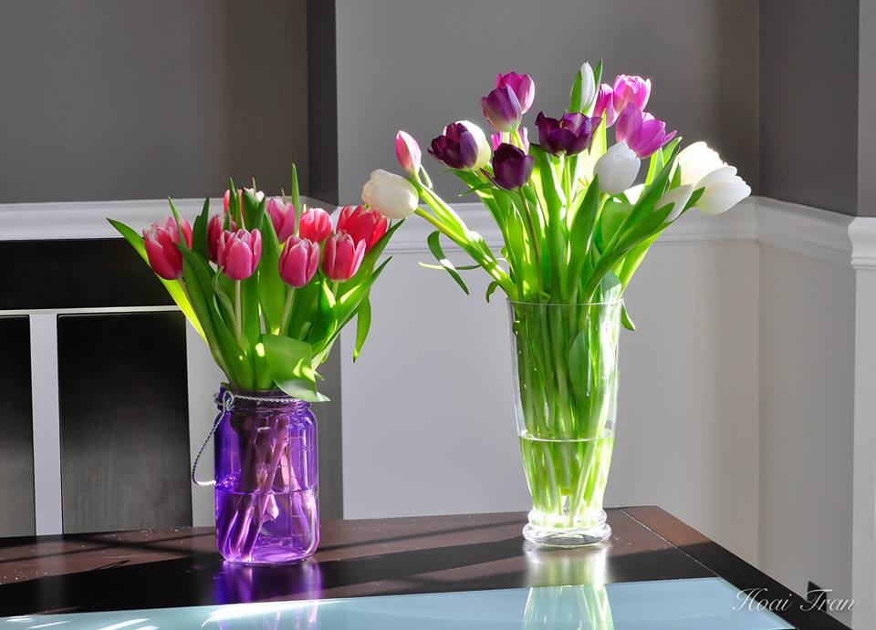 me man tai cam hoa tulip cua me bau viet o my - 13