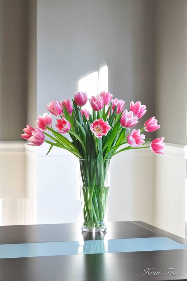me man tai cam hoa tulip cua me bau viet o my - 8