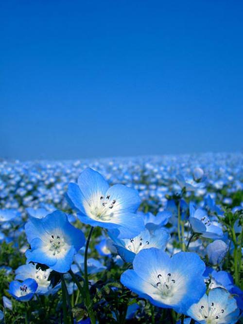 Đam mê vẻ đẹp cánh đồng hoa rực rỡ - 1