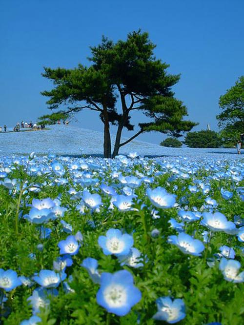 Đam mê vẻ đẹp cánh đồng hoa rực rỡ - 2