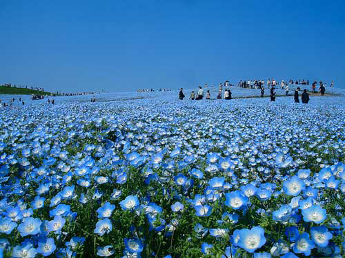 Đam mê vẻ đẹp cánh đồng hoa rực rỡ - 3