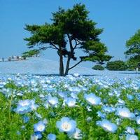 Đam mê vẻ đẹp cánh đồng hoa rực rỡ