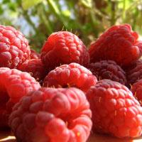 7 loại trái cây nhiều vitamin C nhất mùa hè này