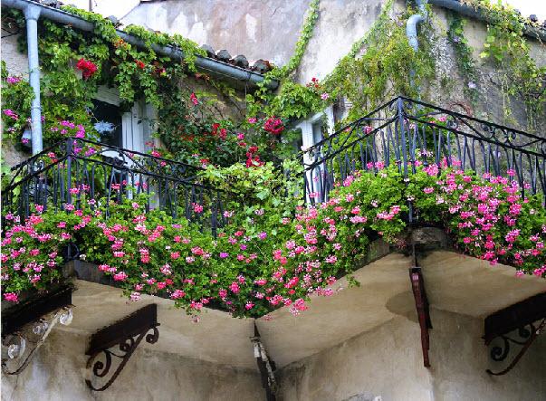 Hoa đẹp rực rỡ ban công - 9
