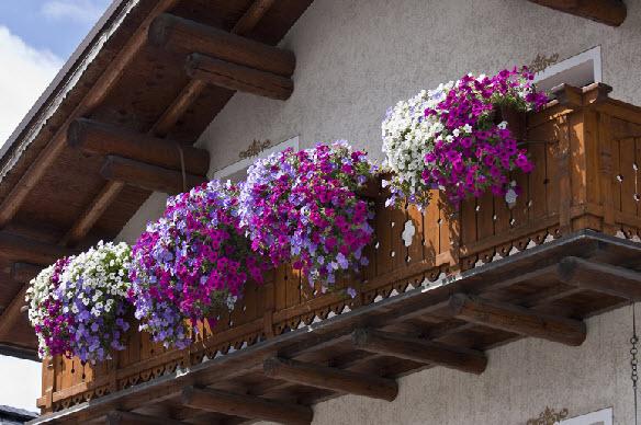 Hoa đẹp rực rỡ ban công - 8