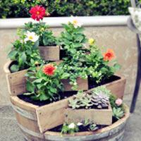 Vườn hoa xinh trong thùng gỗ