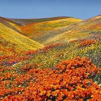 Ngắm đồng hoa giai nhân mỹ lệ
