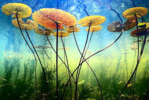 10 ảnh thiên nhiên đẹp nhất mọi thời đại - 1
