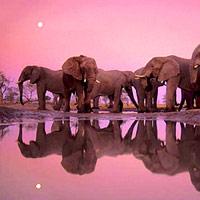 10 ảnh thiên nhiên đẹp nhất mọi thời đại