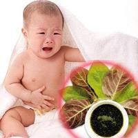 Trứng lá mơ - thuốc cho bé tiêu chảy