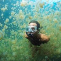 Du ngoạn trong hồ hàng triệu con sứa