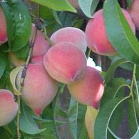 Những rau quả cần hạn chế trong mùa hè