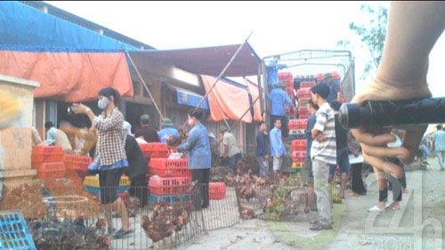 Hành trình truy tìm gà 30 nghìn/kg - 2