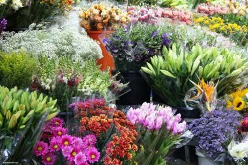 Eva mách nhau cách chọn và giữ hoa tươi lâu - 1