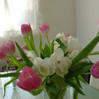 Eva mách nhau cách chọn và giữ hoa tươi lâu