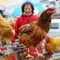 Tin tức - Cúm A/H7N9 lây lan nhanh ở Trung Quốc
