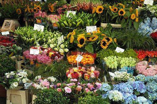 cho hoa noi duy nhat tren the gioi tai amsterdam - 3