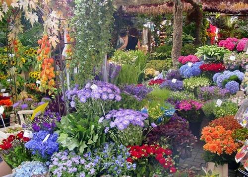 cho hoa noi duy nhat tren the gioi tai amsterdam - 4