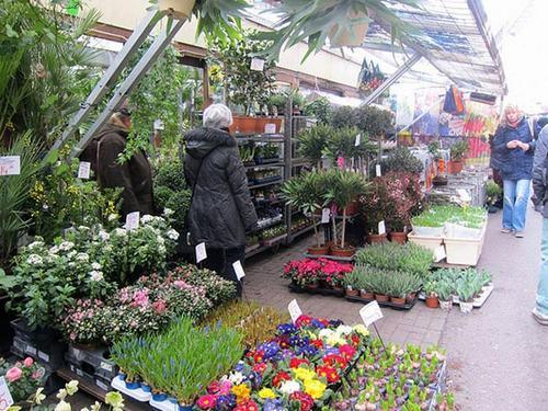 cho hoa noi duy nhat tren the gioi tai amsterdam - 5