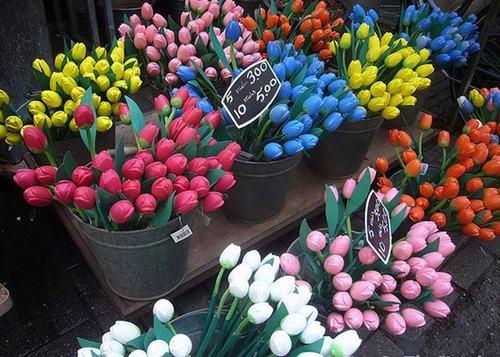 cho hoa noi duy nhat tren the gioi tai amsterdam - 7