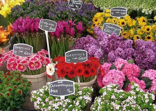 cho hoa noi duy nhat tren the gioi tai amsterdam - 8