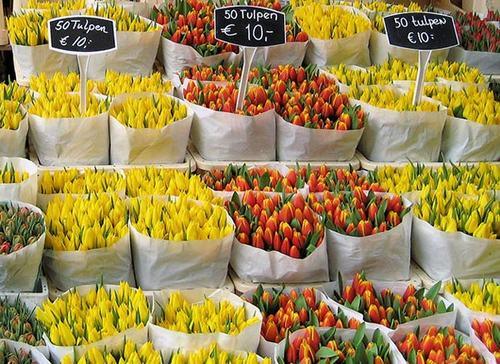 cho hoa noi duy nhat tren the gioi tai amsterdam - 9