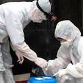 Tin tức - Ninh Thuận: Công bố dịch bệnh cúm H5N1 trên đàn chim yến nuôi