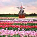 Xem & Đọc - Những thiên đường hoa đẹp ngất ngây
