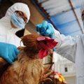 Tin tức - Dịch cúm H7N9 đã xuất hiện ở Đài Loan