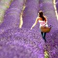 Đi đâu - Xem gì - 5 lễ hội hoa tuyệt vời trên thế giới