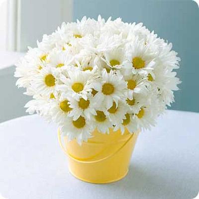 su tich hoa cuc trang - 1