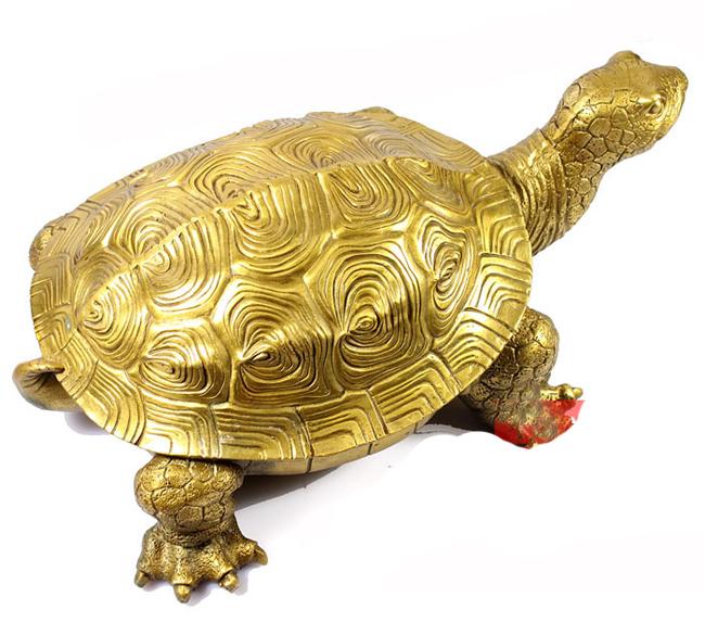 Rùa được các nhà khoa học chứng minh là một trong số những loài vật có tuổi thọ thuộc hàng cao nhất. Trong văn hóa Việt Nam, rùa là một linh vật được tôn trọng từ ngàn xưa.