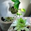 Nhà đẹp - 2 chiêu trồng cây cực xinh cho hè 2013