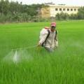 Mua sắm - Giá cả - Lo ngại thuốc trừ sâu neonicotinoid sẽ vào VN
