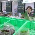Mua sắm - Giá cả - HN: Rau sạch lép vế trước rau bẩn