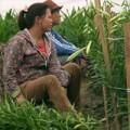 Mua sắm - Giá cả - Nông dân khổ sở với giống cây Trung Quốc