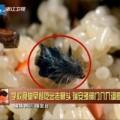 Mua sắm - Giá cả - TQ: Phát hiện đầu chuột trong gói xôi sáng
