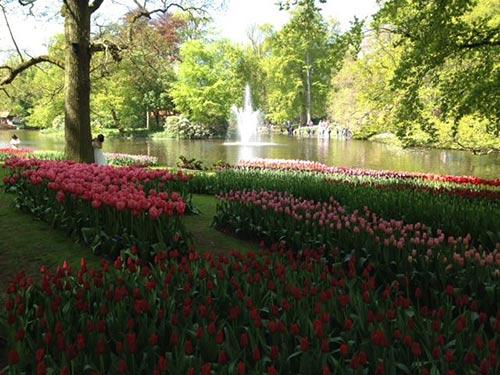 thu minh ve que chong ngam hoa tulip - 5