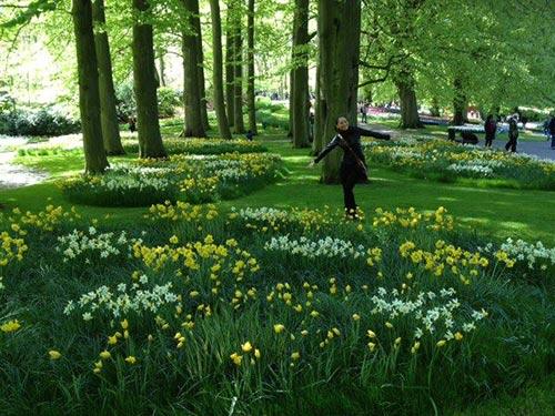 thu minh ve que chong ngam hoa tulip - 6